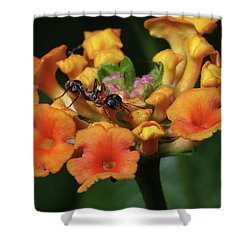 Ant On Plant  Shower Curtain by Richard Rizzo