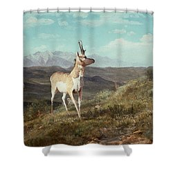 Antelope Shower Curtain by Albert Bierstadt