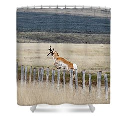 Shower Curtain featuring the photograph Antelope Jumping Fence 1 by Rebecca Margraf