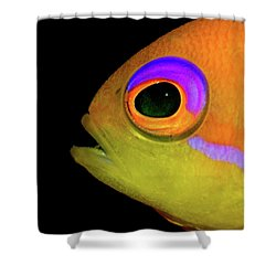 Anthias Shower Curtain