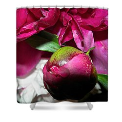 Anticipation Shower Curtain by Randy Rosenberger