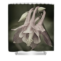 Shower Curtain featuring the photograph Antique Columbine - D010096 by Daniel Dempster