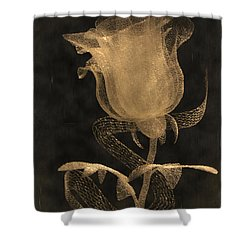 Antique Rose Of Glass Shower Curtain