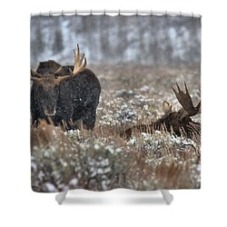 Shower Curtain featuring the photograph Antlers In The Brush by Adam Jewell