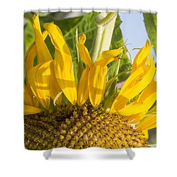 Ants On A Sunflower Shower Curtain