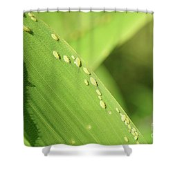 Aphid Family Shower Curtain