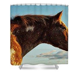 Appaloosa Mare Shower Curtain