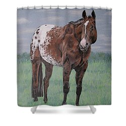 Appaloosa Shower Curtain by Melita Safran