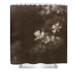 Apple Blossom 1 Shower Curtain by Simone Ochrym