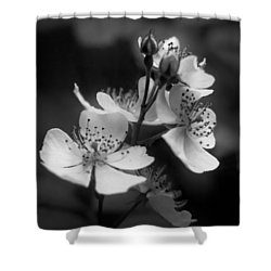 Apple Blossom 2 Shower Curtain by Simone Ochrym