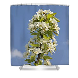 Apple Blossom In Spring Shower Curtain by Matthias Hauser