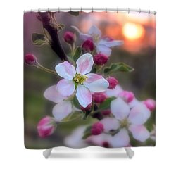 Apple Blossom Sunrise Shower Curtain by Henry Kowalski