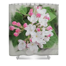 Apple Blossom Time Shower Curtain by Kathie Chicoine