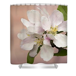 Shower Curtain featuring the photograph Apple Blossoms 2 by Inge Riis McDonald