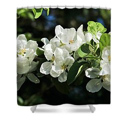 Apple Blossoms 2017 Shower Curtain