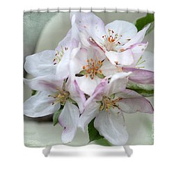 Apple Blossoms From My Hepburn Garden Shower Curtain