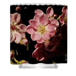 Apple Blossoms IIi Shower Curtain