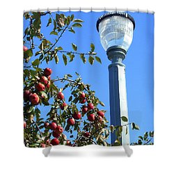 Shower Curtain featuring the photograph Apple Fest  by Irina Sztukowski