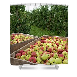 Apple Harvest Shower Curtain by Hans Engbers