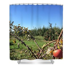 Apple Orchard 1 Shower Curtain