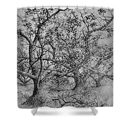 Apple Orchard Shower Curtain by Jim Hubbard