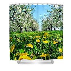 Apple Orchard, Nova Scotia, Annapolis Valley Shower Curtain