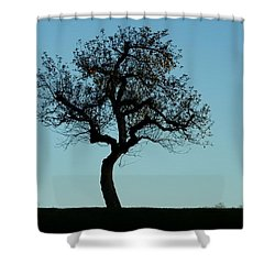 Apple Tree In November Shower Curtain
