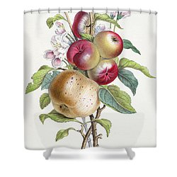 Apple Tree Shower Curtain by JB Pointel du Portail