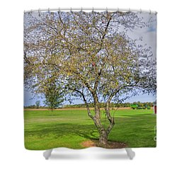 Apple Tree Shower Curtain by Kathleen Struckle