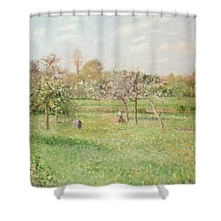 Apple Trees At Gragny Shower Curtain by Camille Pissarro