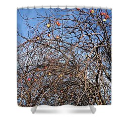 Apples In December Shower Curtain