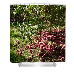 Apples...apples...everywhere Shower Curtain