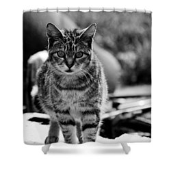 Shower Curtain featuring the photograph Approaching  by Chriss Pagani