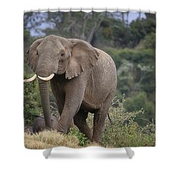 Shower Curtain featuring the photograph Approaching The Waterhole by Gary Hall