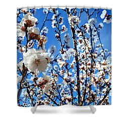 Shower Curtain featuring the photograph Apricot Blossoms by Glenn McCarthy Art and Photography
