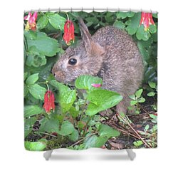 April Rabbit And Columbine Shower Curtain