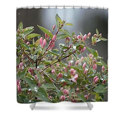 April Showers 10 Shower Curtain by Antonio Romero