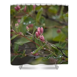 April Showers 2 Shower Curtain by Antonio Romero