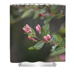April Showers 3 Shower Curtain by Antonio Romero