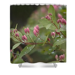 April Showers 4 Shower Curtain by Antonio Romero