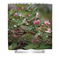 April Showers 6 Shower Curtain