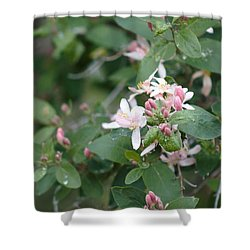 April Showers 9 Shower Curtain by Antonio Romero