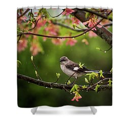 April Showers Bring May Flowers Mocking Bird Shower Curtain
