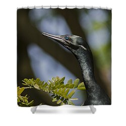 Aqua Blue Eyes - Little Cormorant Shower Curtain