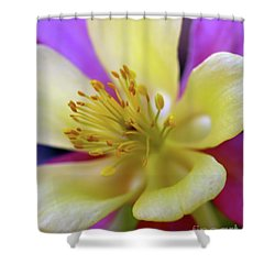 Aquilegia Columbine Shower Curtain by Baggieoldboy