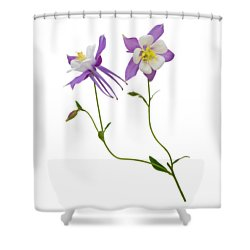 Aquilegia Specimen Shower Curtain by Jane McIlroy