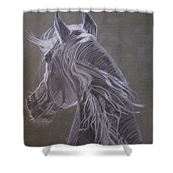 Arab Horse Shower Curtain by Melita Safran