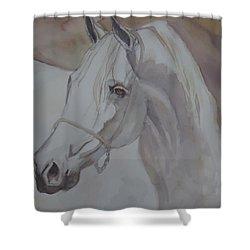 Arab Stallion In The Desert Shower Curtain