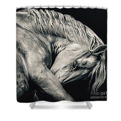 Arabian Beauty White Horse Portrait Shower Curtain