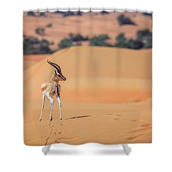 Shower Curtain featuring the photograph Arabian Gazelle by Alexey Stiop